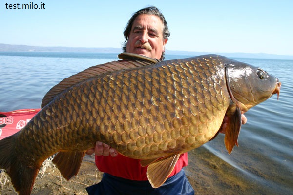 Carpfishing sul lago di bolsena a marta gradoli e for Grosso pesce di lago