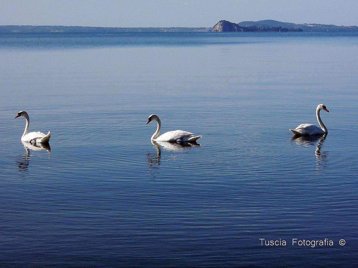 Isola Bisentina e il Lago di Bolsena